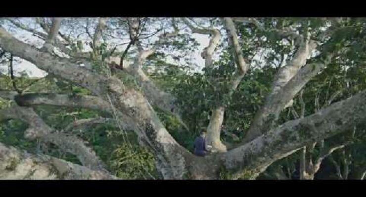 Das Geheimnis der Bäume - Trailer