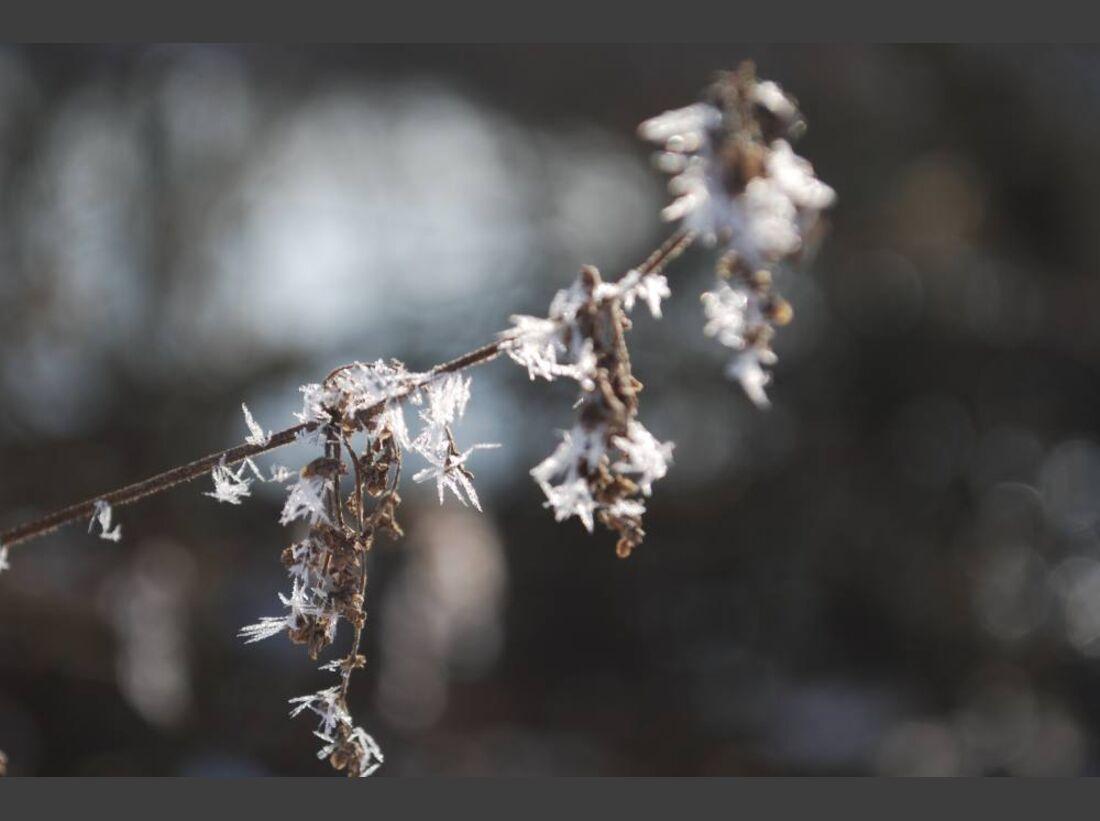 OD 0311_Winterbilder_Monika Kraft