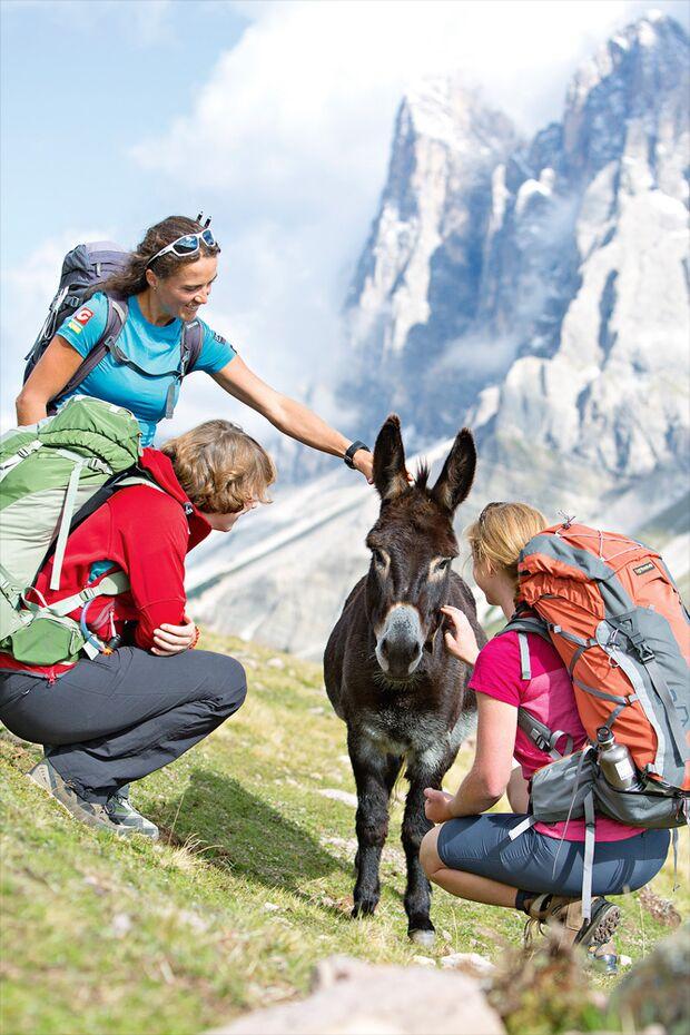 OD 1115 Woman Südtirol Dolomiten Inneraschötzer Alm Esel