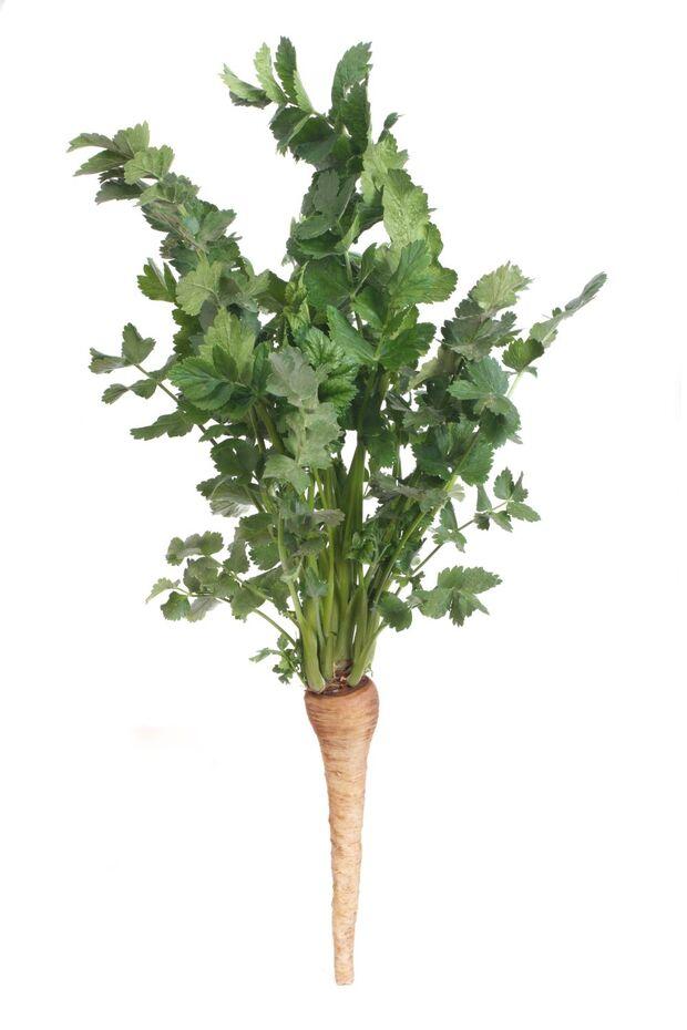 od-essbare-pflanzen-Pastinake_COLOURBOX6770585 (1).jpg